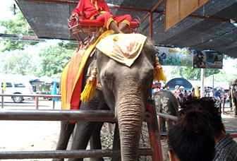 elepha_ride.jpg
